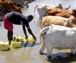 1-africa-collecting-water-with-cows