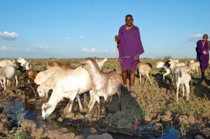 man with animals drinking water, kenya